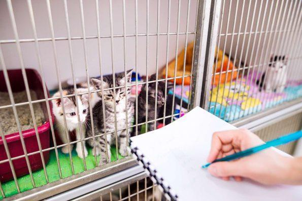 A team member recording some information about kittens