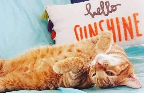 An orange cat laying on his back on the couch