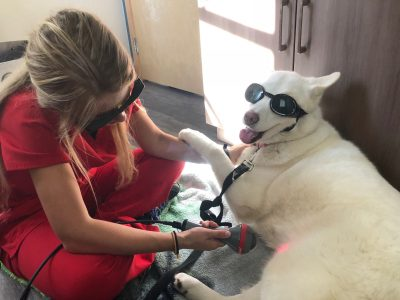 A team member performing laser therapy on a dog